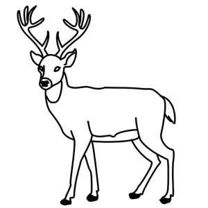 How to draw a deer for How to draw a deer step by step