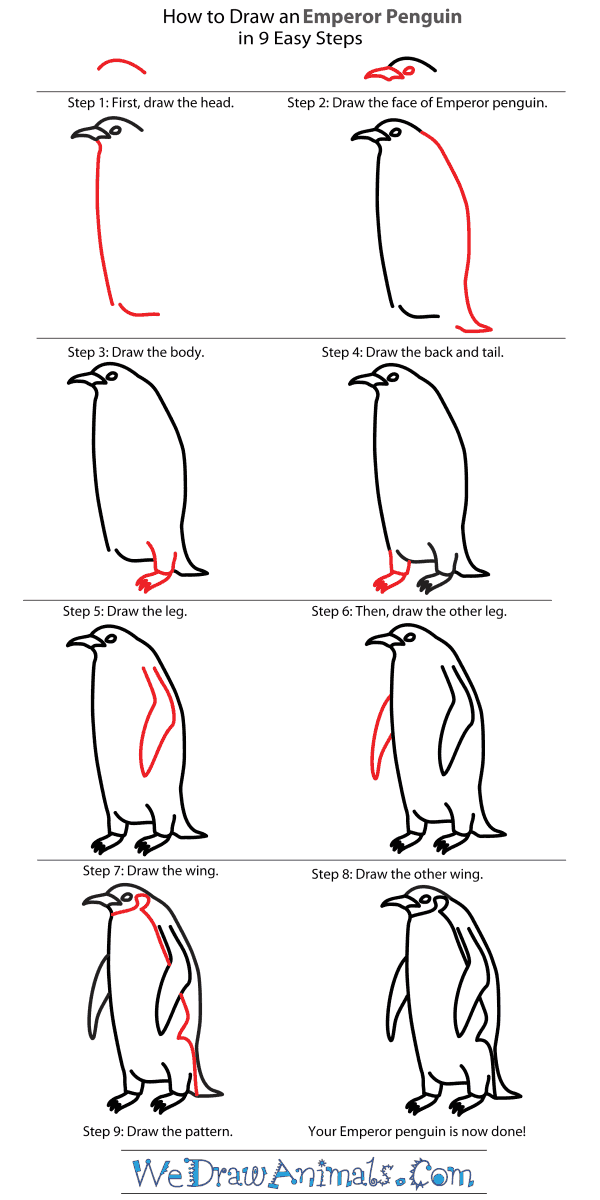 How To Draw a Penguin  StepbyStep